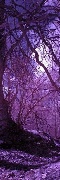 - Forêt - * Amarantine *