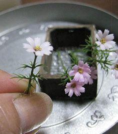 Cosmos. Dollhouse & Miniature ROSY, Yukari Miyazaki