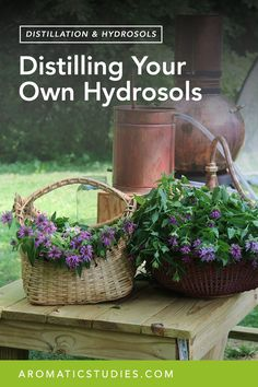 "Hydrosols are the aromatic waters produced via distillation. Suzanne Catty popularized hydrosols years ago with her book ""Hydrosols: The Next Aromatherapy"" and for years hydrosols were quite abundant in the market. Then there seemed to be a little bit of a quiet time for hydrosols until now when they are experiencing a kind of renaissance. READ MORE"