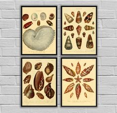 """Vintage Conchology Art - Set of 4 - Print or Canvas - Vintage Seashells Prints - Nautical Wall Art, Antique Beach Decor 261-265 by STANLEYprintHOUSE  12.00 USD  Vintage Conchology Art - Set of 4 - Print or Canvas - Vintage Seashells Prints - Nautical Wall Art, Antique Beach Decor 261-265  This set is available as Prints or Canvas.  ****Prints available in various sizes from 5""""x7"""" - 24""""x36""""**** ****Canvas available in various sizes from  5""""x ..  https://www.etsy.com/ca/listing/46950.."""
