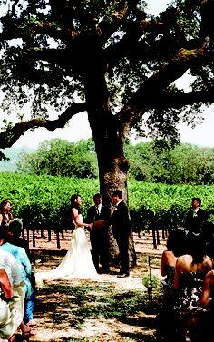 A beautiful oak tree is all the decor you need!
