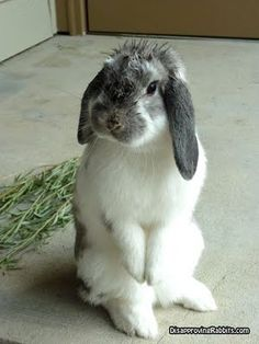 Disapproving Rabbits.....how will you disappoint them?