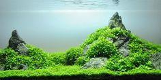 IWagumi Aquascaping Styles