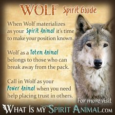 In-depth Wolf Symbolism & Wolf Meanings! Wolf as a Spirit, Totem, & Power Animal. Plus, Wolf in Celtic & Native American Symbols & Wolf Dreams! Wolf Totem, Spirit Animal Totem, Animal Spirit Guides, Hawk Spirit Animal, Wolf Symbolism, Animal Symbolism, Native American Zodiac, Native American Symbols, Native American Religion