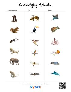Classifying Animals, English Vocabulary, Phonics, Climbing, Worksheets, Walking, Swim, Activities, Sevilla