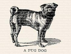 Pug Dog Illustration - Vintage Animal Clip Art Image – Pug Dog Digital Stamp - Printable Transfer Graphic – instant download clipart - CU OK