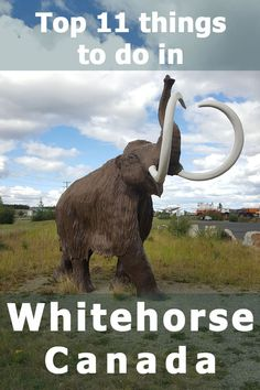 11 Top things to do in Whitehorse, Canada. Plan your trip to the capital of the Yukon with this list. Places To Travel, Travel Destinations, Travel Tips, Travel Guides, Backpacking Canada, Backpacking Trips, Road Trips, Visit Canada, Viajes