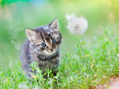 CPR and Artificial Respiration for Kittens   petMD