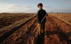 A North Korean boy works in a field of a collective farm in the area damaged by summer floods and typhoons in South Hwanghae province September REUTERS/Damir Sagolj Inside North Korea, Life In North Korea, Chernobyl Nuclear Power Plant, Military First, Earthquake And Tsunami, Nuclear Disasters, Spiegel Online, Living Environment, Nature Reserve