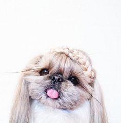 We'll see your fashion sense and raise you Kuma, the most stylish pup around