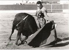 """Natural de Curro a """"Telonero"""", número 41, un """"coquilla"""" de Sánchez-Arjona (Ciempozuelos, 11.9.1977) Spanish Culture, Bella, Highlights, Spain, Death, Horses, Natural, Animals, Image"""