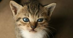 Best Cause Campaign ever! Kitten Delivery Promotion Leads to Uber Cat Shortage
