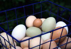 Backyard Chickens: Fascinating Egg Facts | HGTV Gardens
