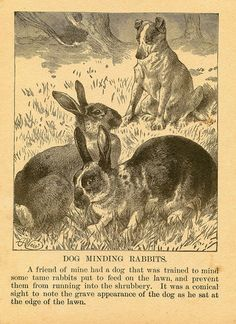 Jack Russell Terrier Dog with Pet Rabbit Friends Antique Print 1896 | eBay