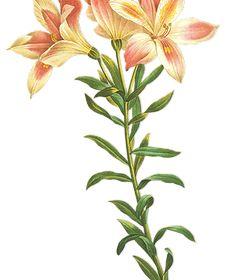 flores blog da lu
