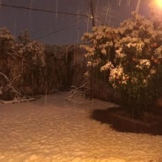 Así da gusto despertar en #diciembre #december #snow #nevada #chihuahua #goliath #nieve #invierno #winter