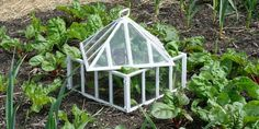 vegetable garden cloche: one way to protect plants from frost Garden Cloche, Garlic Seeds, Prayer Garden, Plant Covers, Plant Care, Frost, Things To Do, Plants, Cold Frames