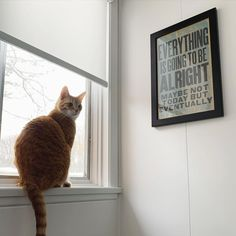 Everything is going to be alright, thanks to cordless window shades from Budget Blinds. Have peace of mind knowing your furry friends are in a safe environment. Window Coverings, Window Treatments, Budget Blinds, Product Offering, Child Safety, Animals For Kids, Budgeting, Kids Room, Room Window