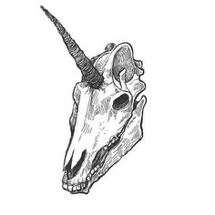 unicorn skull would probably never get it but this is pretty awesome regardless Tattoo Drawings, Art Drawings, Skeleton Drawings, Tattoo Art, Abstrakt Tattoo, Unicorn Tattoos, Animal Skulls, Animal Skull Drawing, Unicorn Drawing