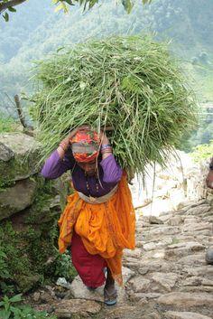 Himalayas - walking haystack