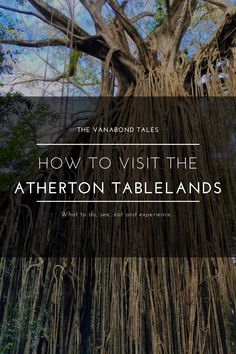 We've discovered the secret to the perfect Atherton Tablelands weekend itinerary, find out the best things to do in the Atherton Tablelands! Atherton Tablelands Queensland Australia | Things to Do in Atherton | Kuranda | Mareeba | Yungaburra | Millaa Millaa | Waterfalls | Lake Tinaroo | Cairns | Queensland Towns | Queensland Travel Destinations | Queensland Road Trips