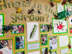 """""""This half terms published learning Class Displays, School Displays, Classroom Displays, Preschool Science, Preschool Activities, Reggio, Nursery Display Boards, Minibeasts Eyfs, Science Display"""