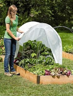 Shirley, for our planting beds. We can make a mini greenhouse dome.How to start a winter vegetable garden - The Cheap Vegetable Gardener Organic Gardening, Gardening Tips, Vegetable Gardening, Urban Gardening, Kitchen Gardening, Organic Compost, Gardening Magazines, Gardening Courses, Gardening Gloves