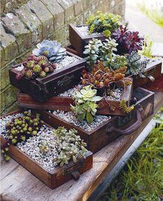 http://www.designsponge.com/2013/04/teeny-tiny-gardening-interview.html