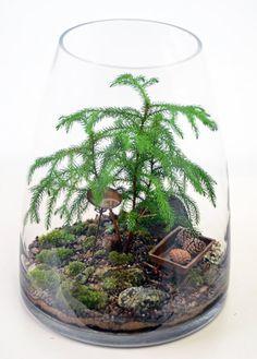 Forest Terrarium with Norfolk Island Pine birdbath by PinkSerissa