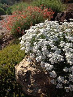 Xeric rock garden-Waterwise Landscapes Incorporated's Design, Pictures, Remodel, Decor and Ideas Landscaping With Rocks, Backyard Landscaping, Landscaping Ideas, Backyard Ideas, Water Garden, Lawn And Garden, Organic Gardening Magazine, Free Plants, Water Wise