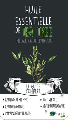 Antibacterial, antiviral, antifungal, the Essential Oil of TEA TREE has properties and uses by tens! Discover it in our Great Guide of Utilization and Purchase with all our dedicated advices. Melaleuca, Tea Tree Essential Oil, Essential Oils, He Tea Tree, Tea Tree Oil For Acne, Burn Out, Happy Skin, New Skin, Diy Skin Care