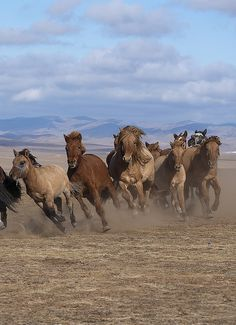 On the run . Mongolia