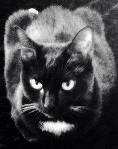 Kitty - noir et blanc