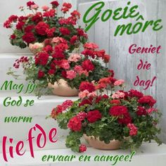 Good Morning Wishes, Good Morning Quotes, Lekker Dag, Afrikaanse Quotes, Goeie Nag, Goeie More, Morning Greetings Quotes, Special Quotes, Beautiful Flowers