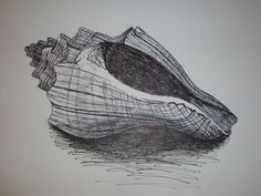 shell drawing - Google Search