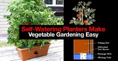 Watering is one of the biggest issues people face in growing vegetables. Self-watering planters or better known as SIP's - sub-irrigated planters take much of the headaches out of watering. Click on the link below where Treehugger has put together 5 self watering planters which make... #garden