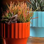 """The vibrant orange container/pot for a rich succulent like """"Sticks on Fire"""" speaks to me! Yum"""