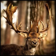 Gorgeous deer