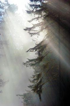 Redwood National Park, CA / Daria Riabchenko