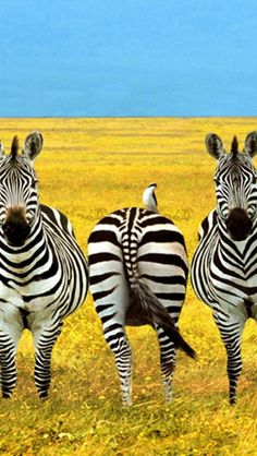 http://www.fashion2dream.com/#!fashion-video/c1zvd  #Video ☀Charming Zebra in Prairie