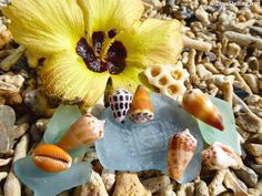 Seashells and Coral with hibiscus flower in Okinawa Japan