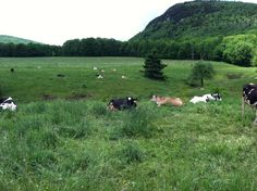 lazyday - from Farm Life Love
