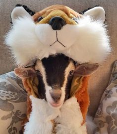 A Goat That Suffers From Anxiety Is Only Calm When She Is In Her - Rescue goat suffers anxiety calms duck costume