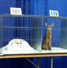 Tall cat vs. a pile of cat