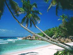 i'd love to lie on a beach like this for a day