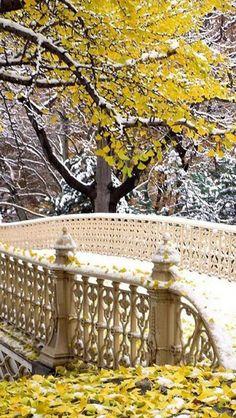 Central Park Manhatt