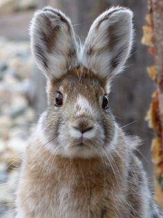 rabbit, bunny, and cute afbeelding Funny Bunnies, Baby Bunnies, Cute Bunny, Bunny Rabbits, Easter Bunny, Easter Art, The Animals, Baby Animals, Funny Animals