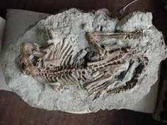 """DESCUBRIMIENTOS CIENTIFICOS (30 AGO 2013)            """"Descubren en China más de un centenar de fósiles de dinosaurios""""."""
