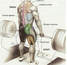 Best Training Routines for Bodybuilding and Fitness Forma Fitness, Fitness Gym, Fitness Nutrition, Mens Fitness, Fitness Motivation, Fitness Workouts, Fitness Routines, Fitness Quotes, Kettlebell