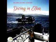 Diving in Elba #greenwhereabouts #divingcenter #scubadiving #scuba #diving #sea #marinelife